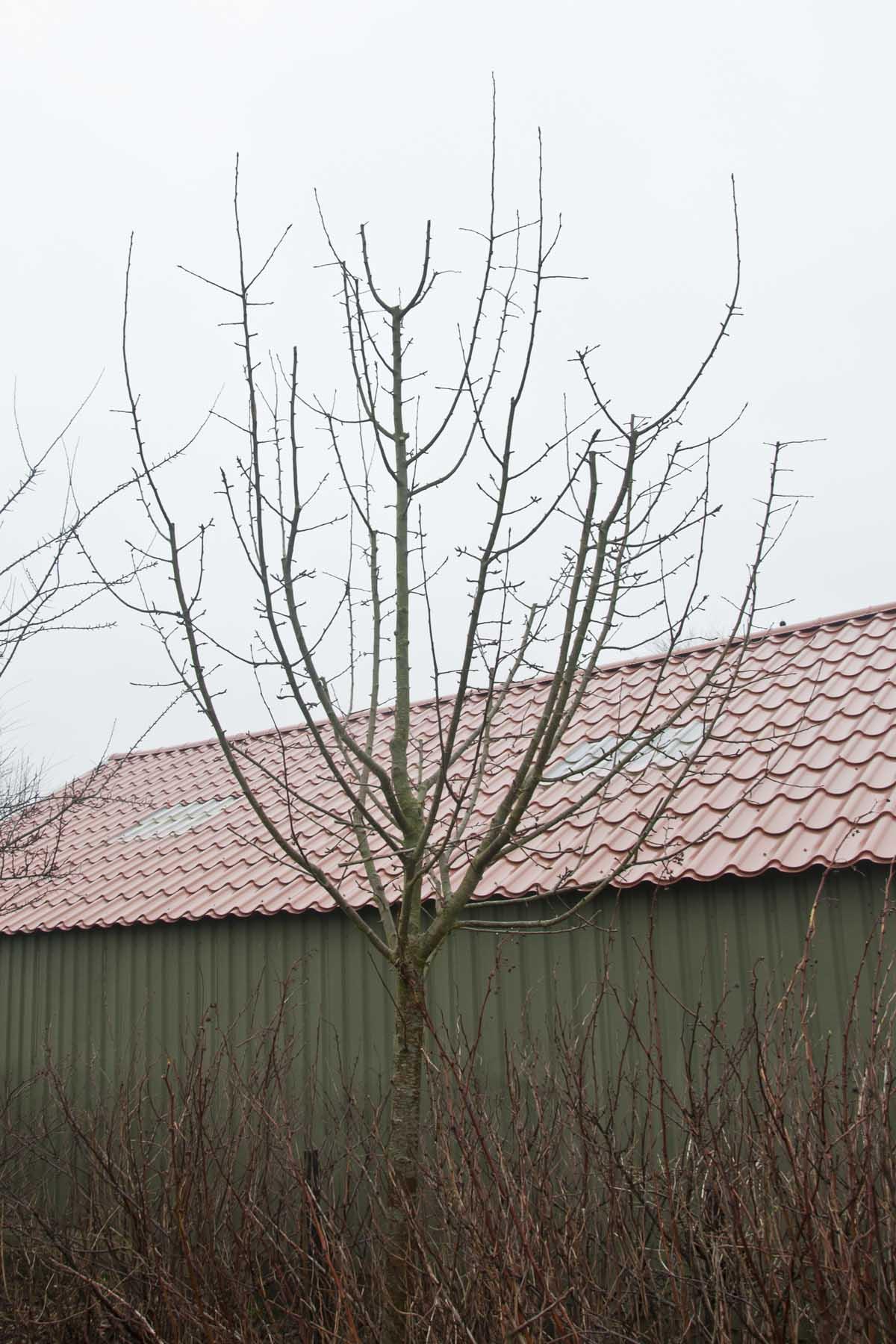 2011-02-26-hsb-blesdijke-2717