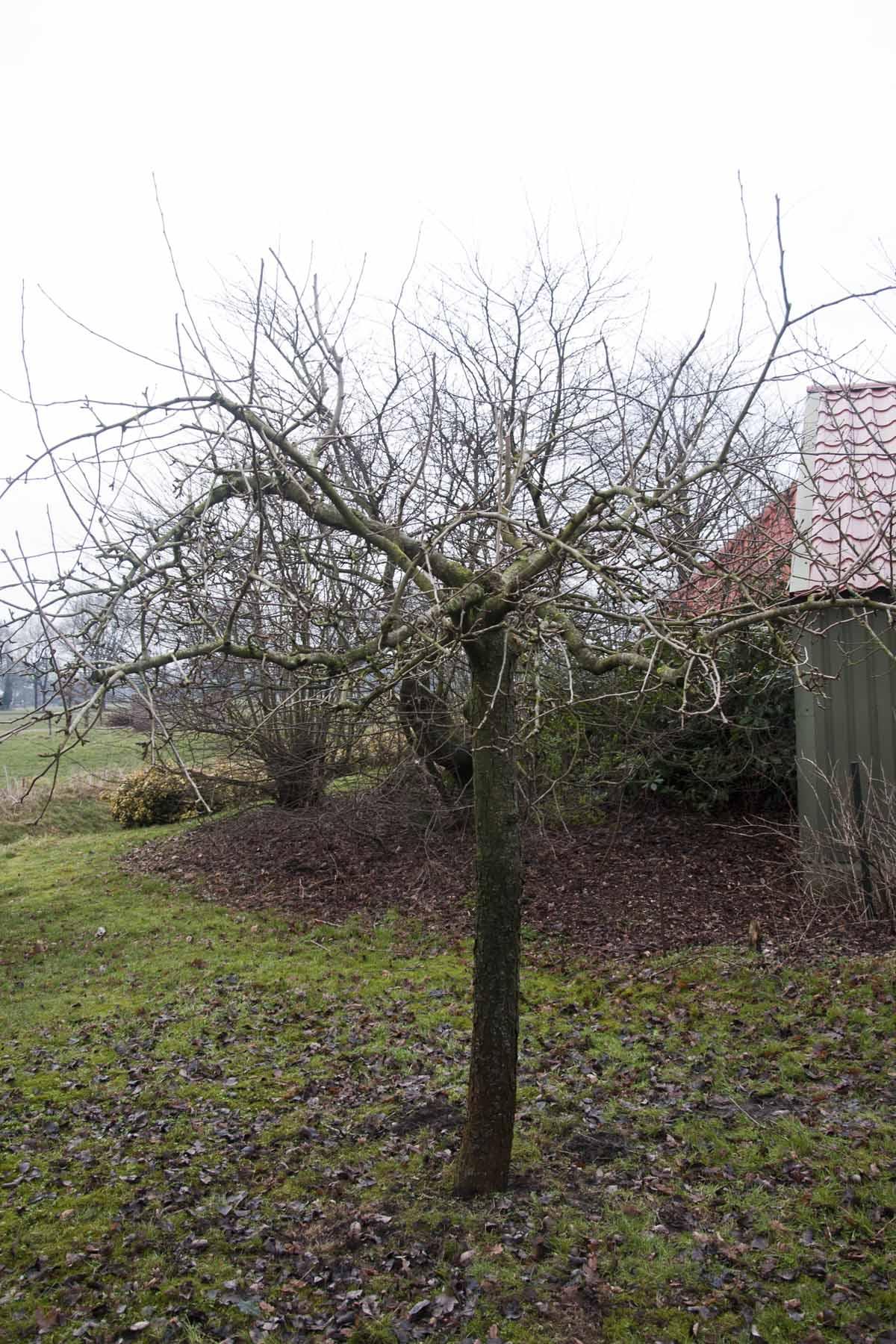 2011-02-26-hsb-blesdijke-2719
