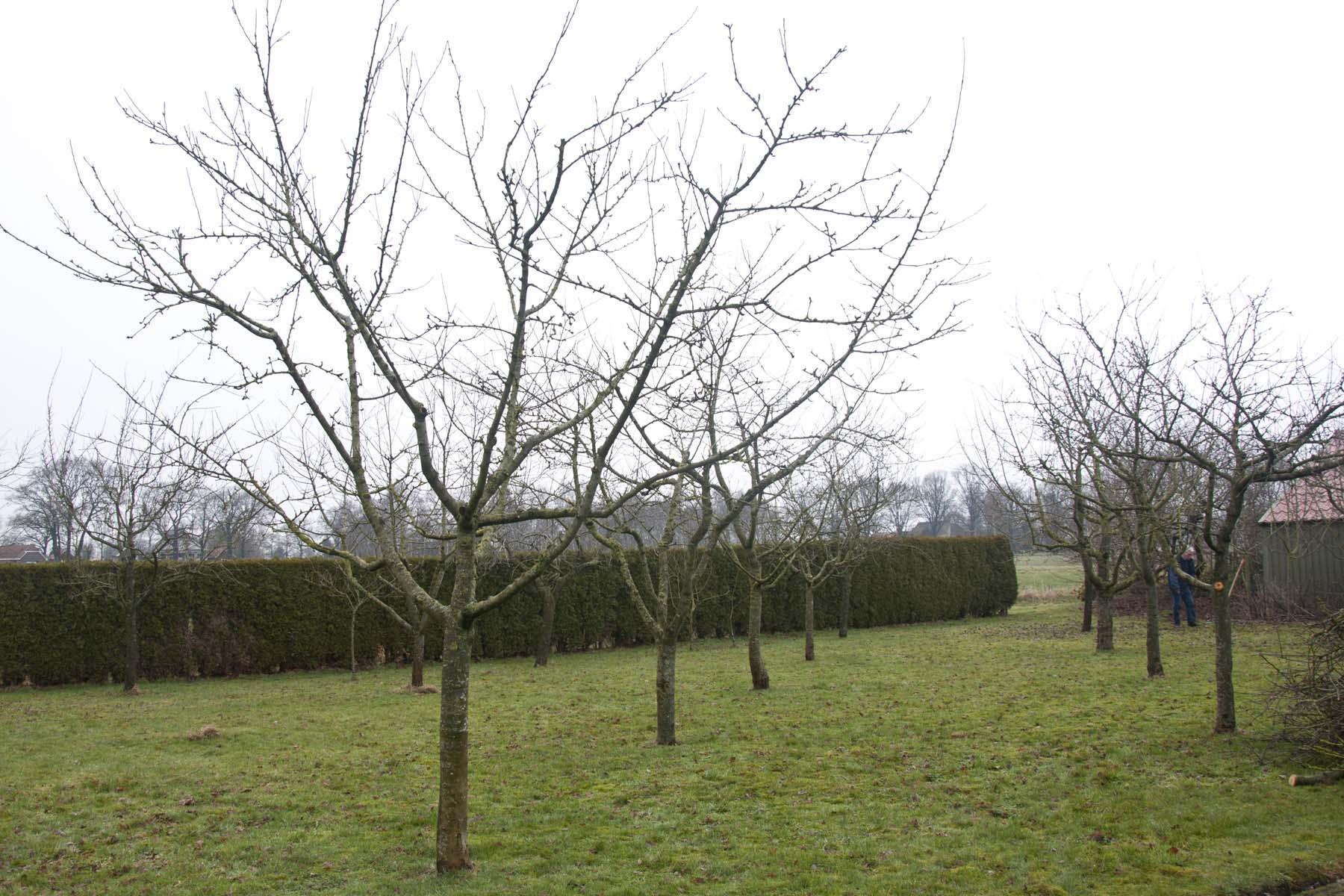 2011-02-26-hsb-blesdijke-2721