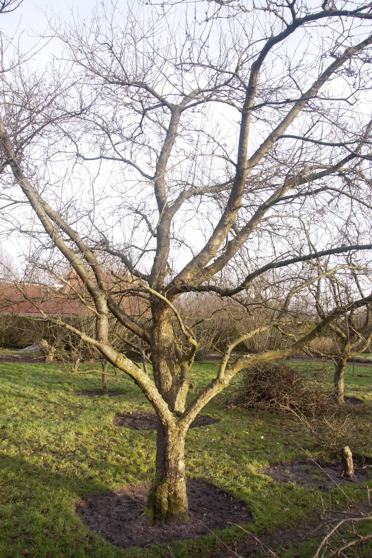 2012-01-14-hsb-blesdijke-3506