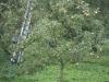 2014 09 17 HSB Blesdijke 5703