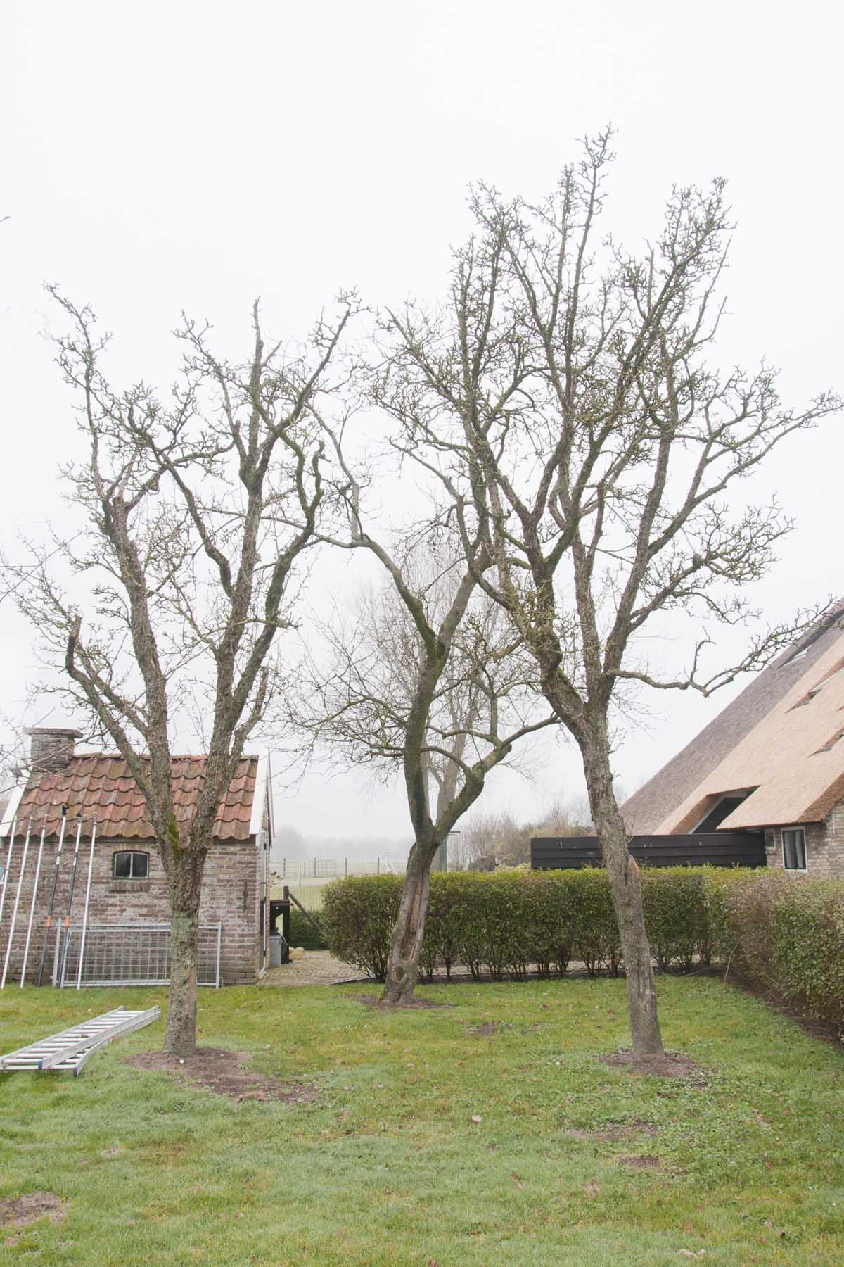 2011-03-19-hsb-de-basse-2768