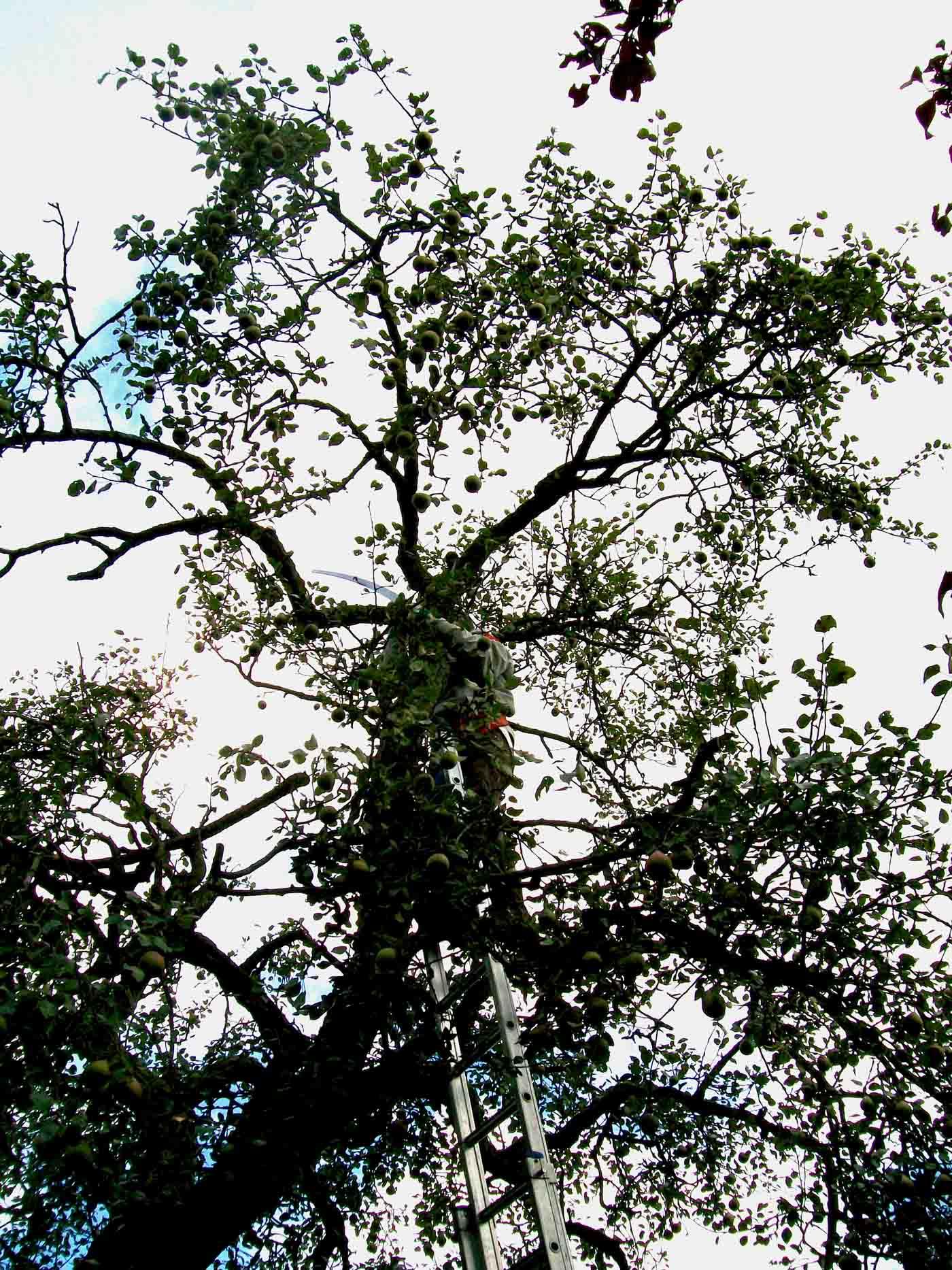 2010-09-18-snoeien-de-pol-4