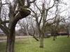 2013-02-16-hsb-giethoorn-4507