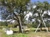 2010-09-05-snoeien-in-st-jansklooster-2393