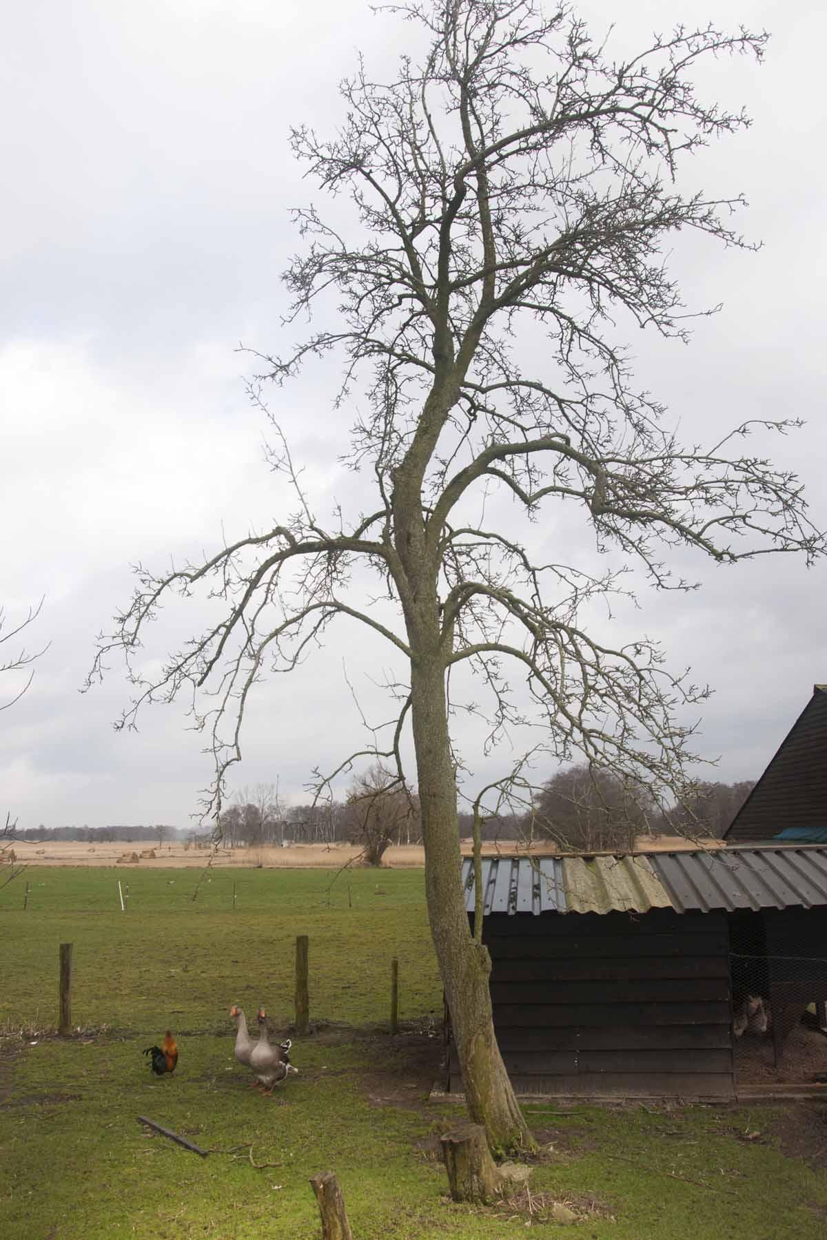2014-02-22-hsb-st-jansklooster-5152