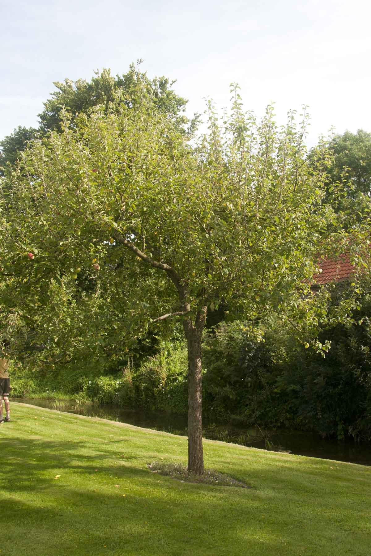 2012-08-18-hsb-steenwijkerwold-4112