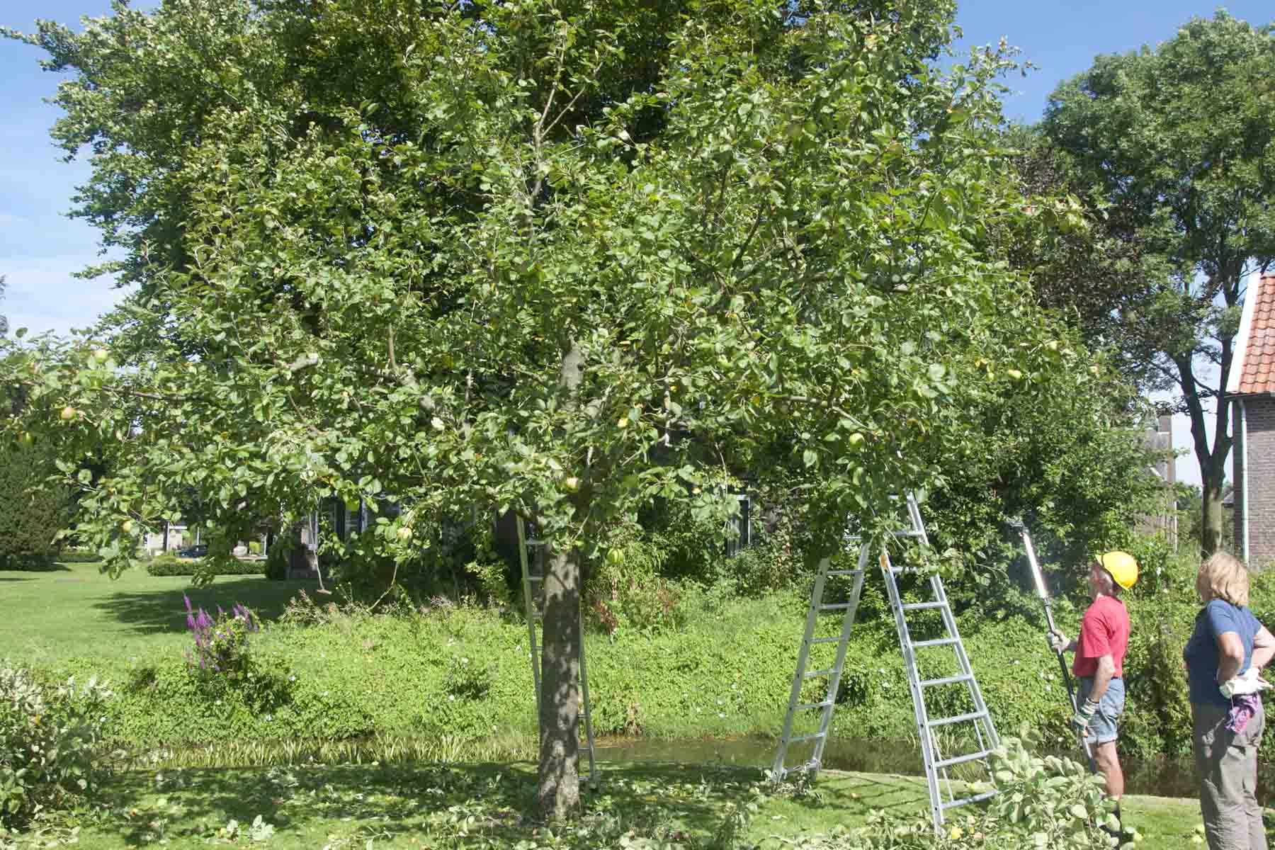 2012-08-18-hsb-steenwijkerwold-4117