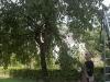 2013-08-17-hsb-vollenhove-4712