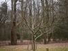 2013-02-23-hsb-vollenhove-4534