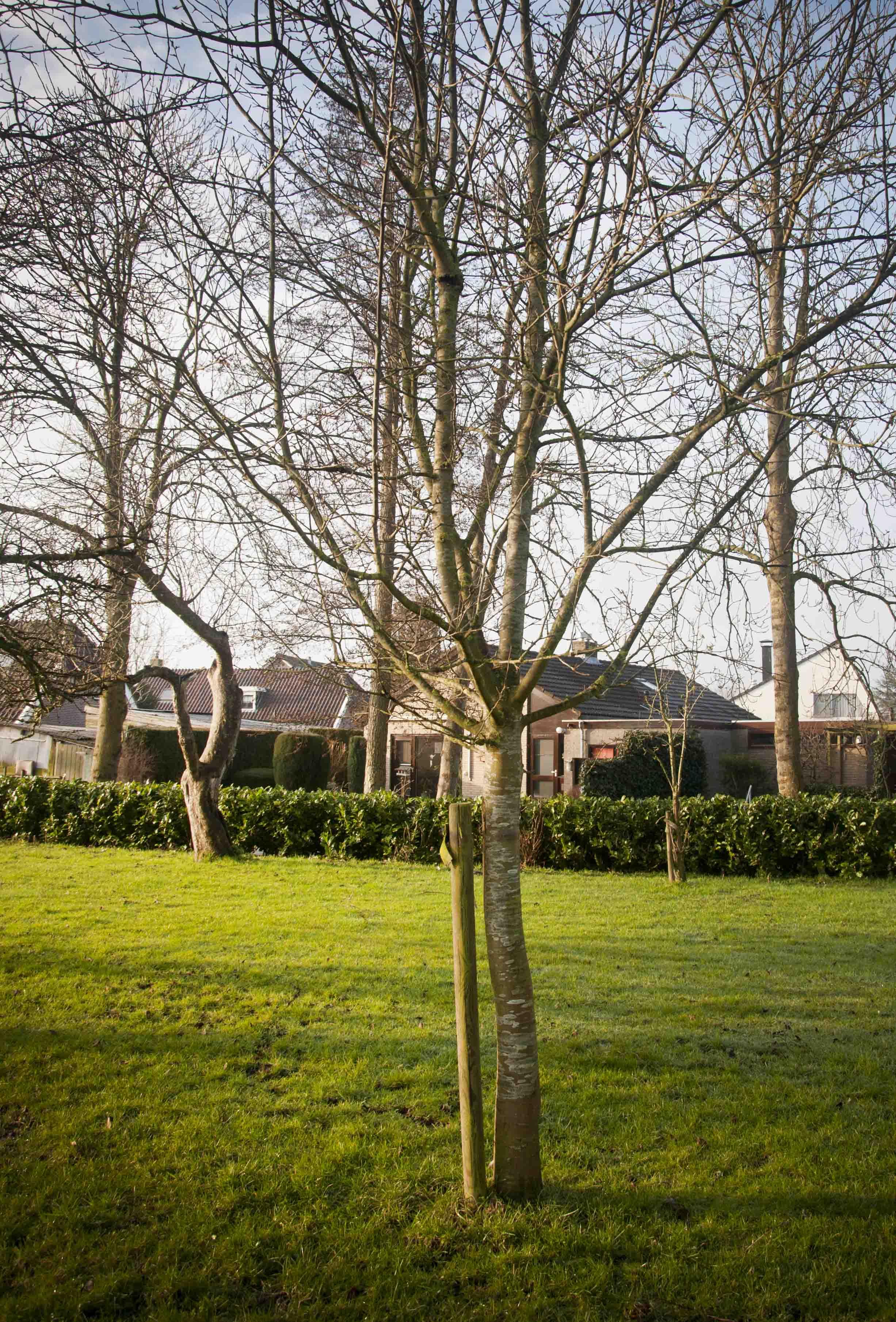 2012-01-28-hsb-wanneperveen-3513
