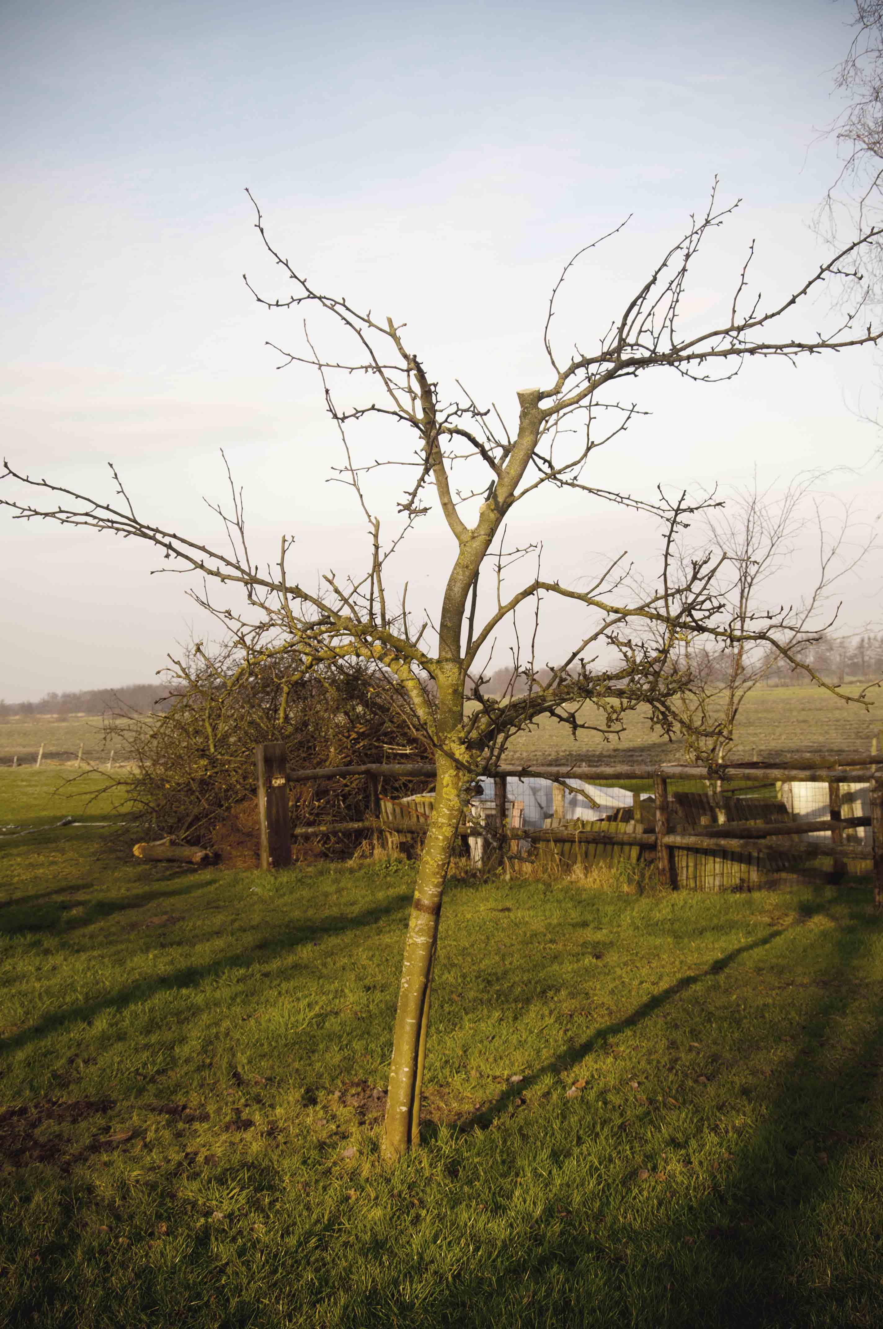2012-01-28-hsb-wanneperveen-3519