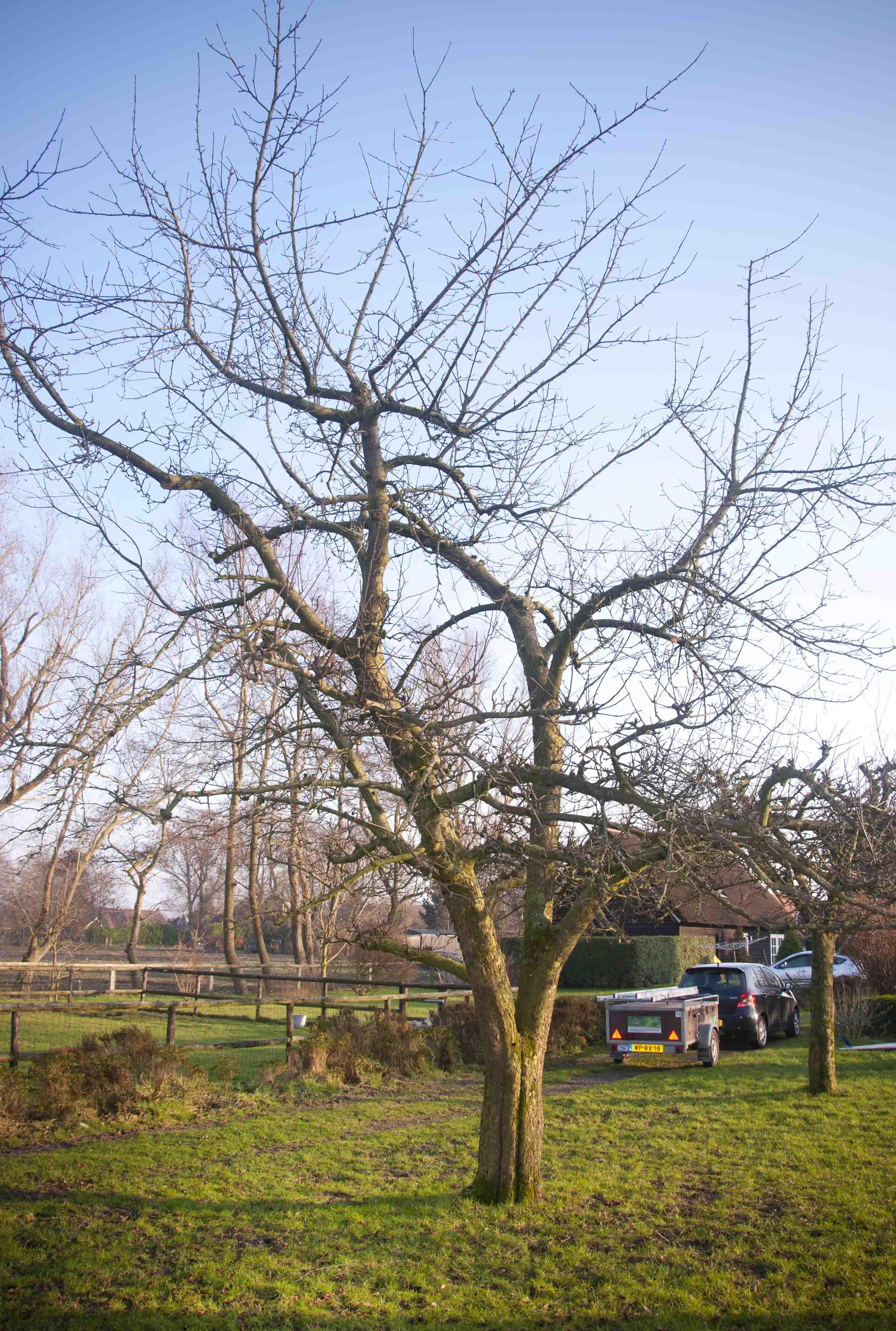 2012-01-28-hsb-wanneperveen-3520