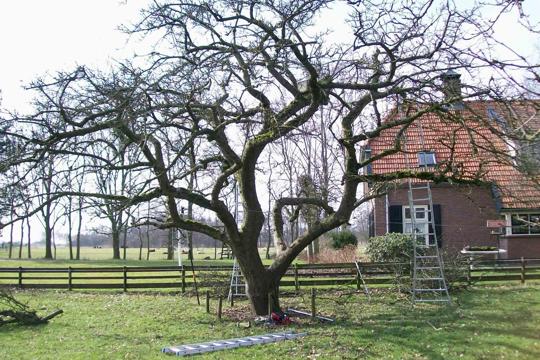 2011-03-12-hsb-wanneperveen-017