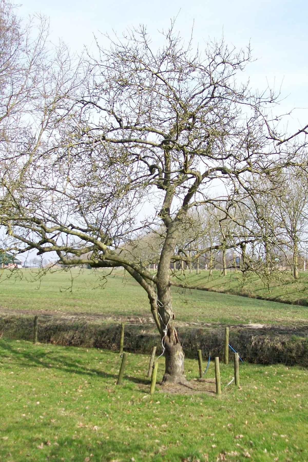 2011-03-12-hsb-wanneperveen-018