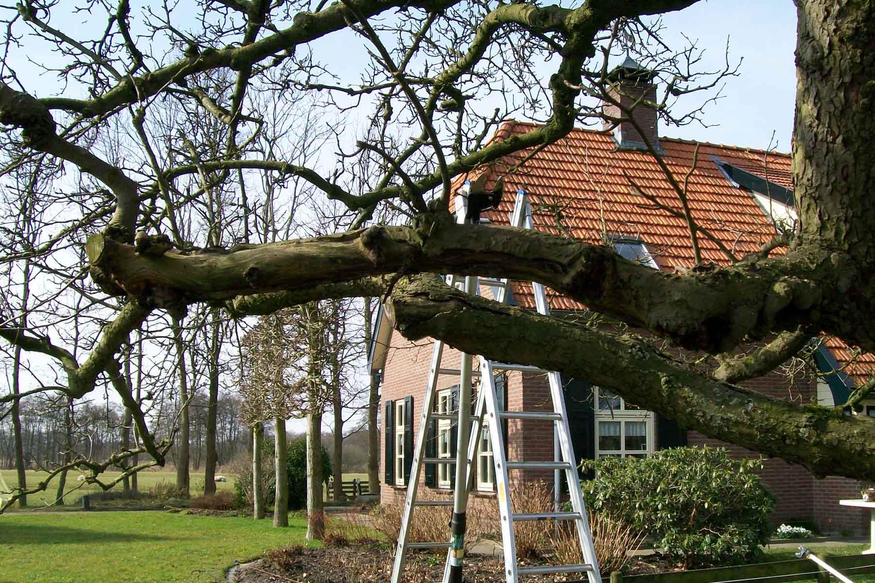 2011-03-12-hsb-wanneperveen-019