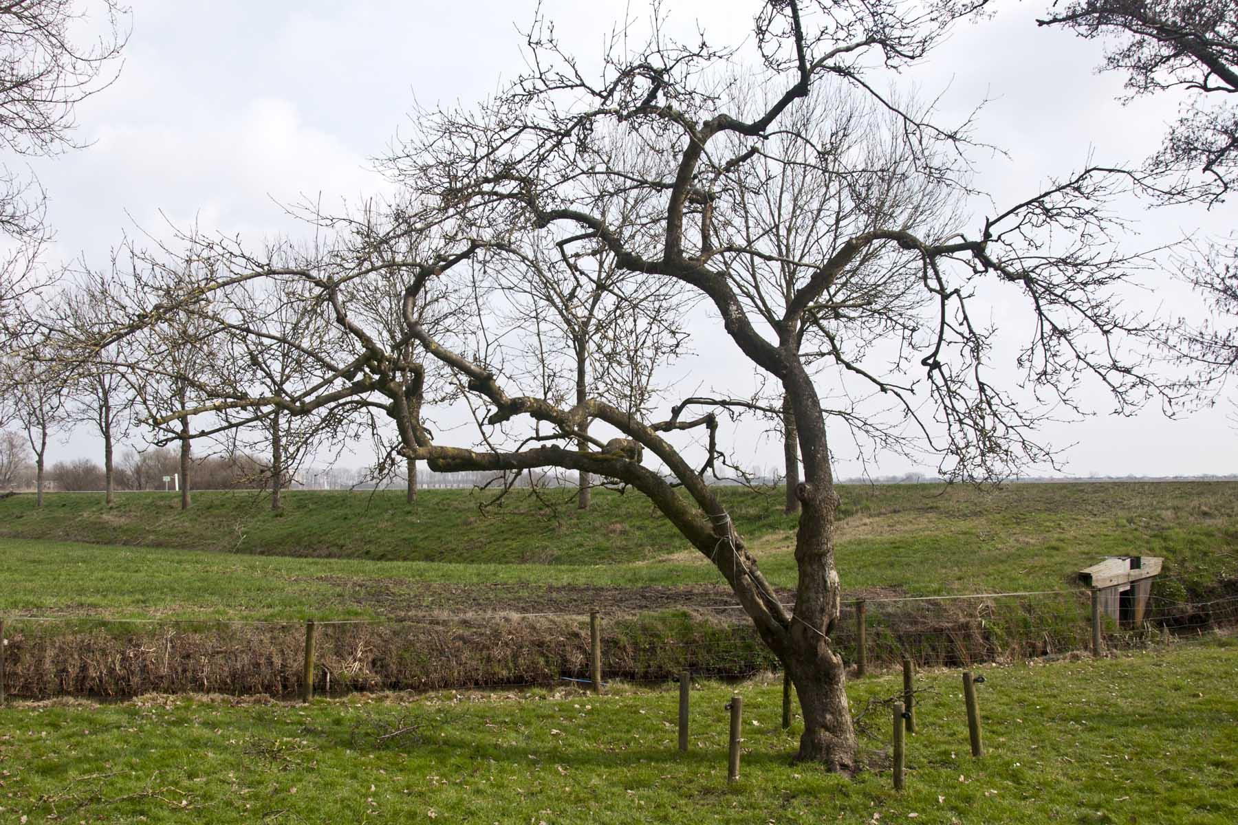 2012-03-17-hsb-wanneperveen-3612