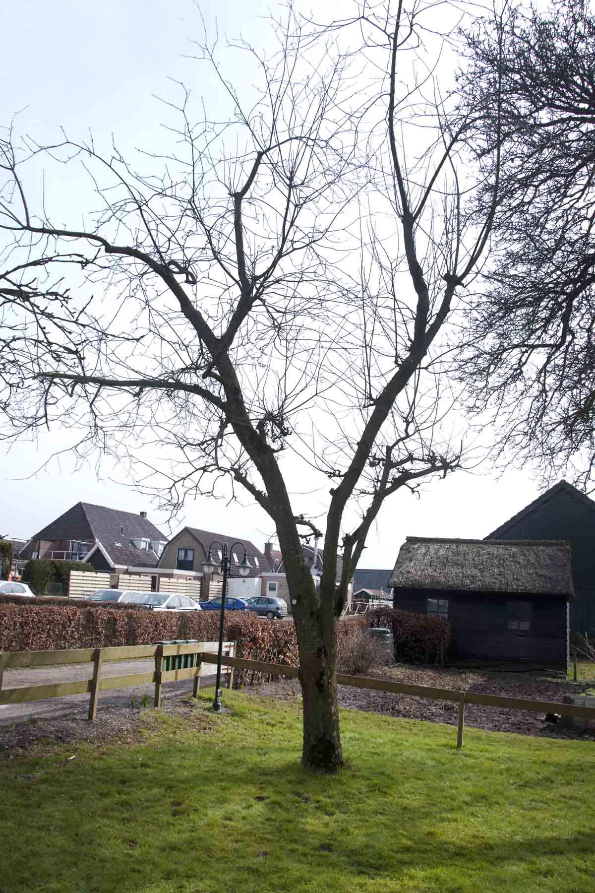 2013-03-23-hsb-wanneperveen-4537