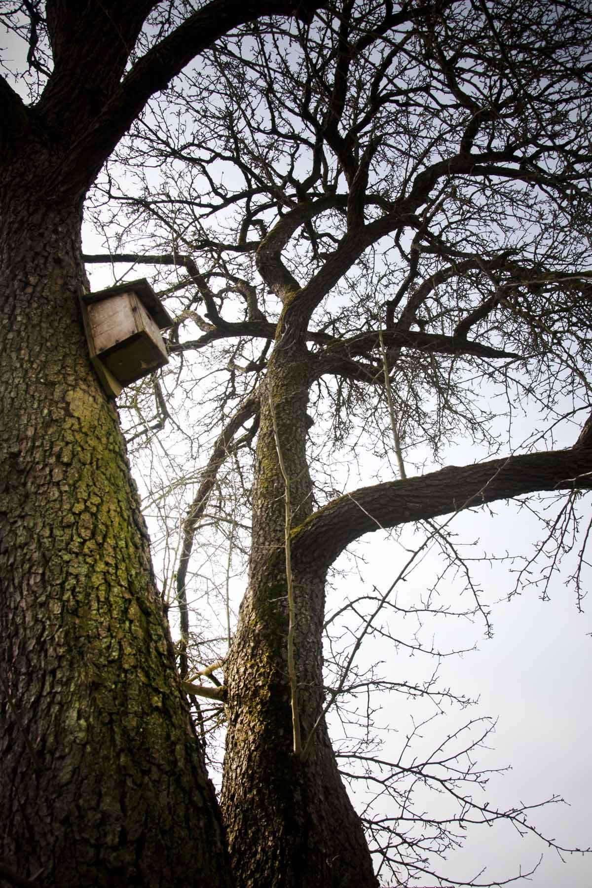 2013-03-23-hsb-wanneperveen-4539