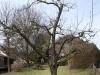 2013-03-23-hsb-wanneperveen-4538