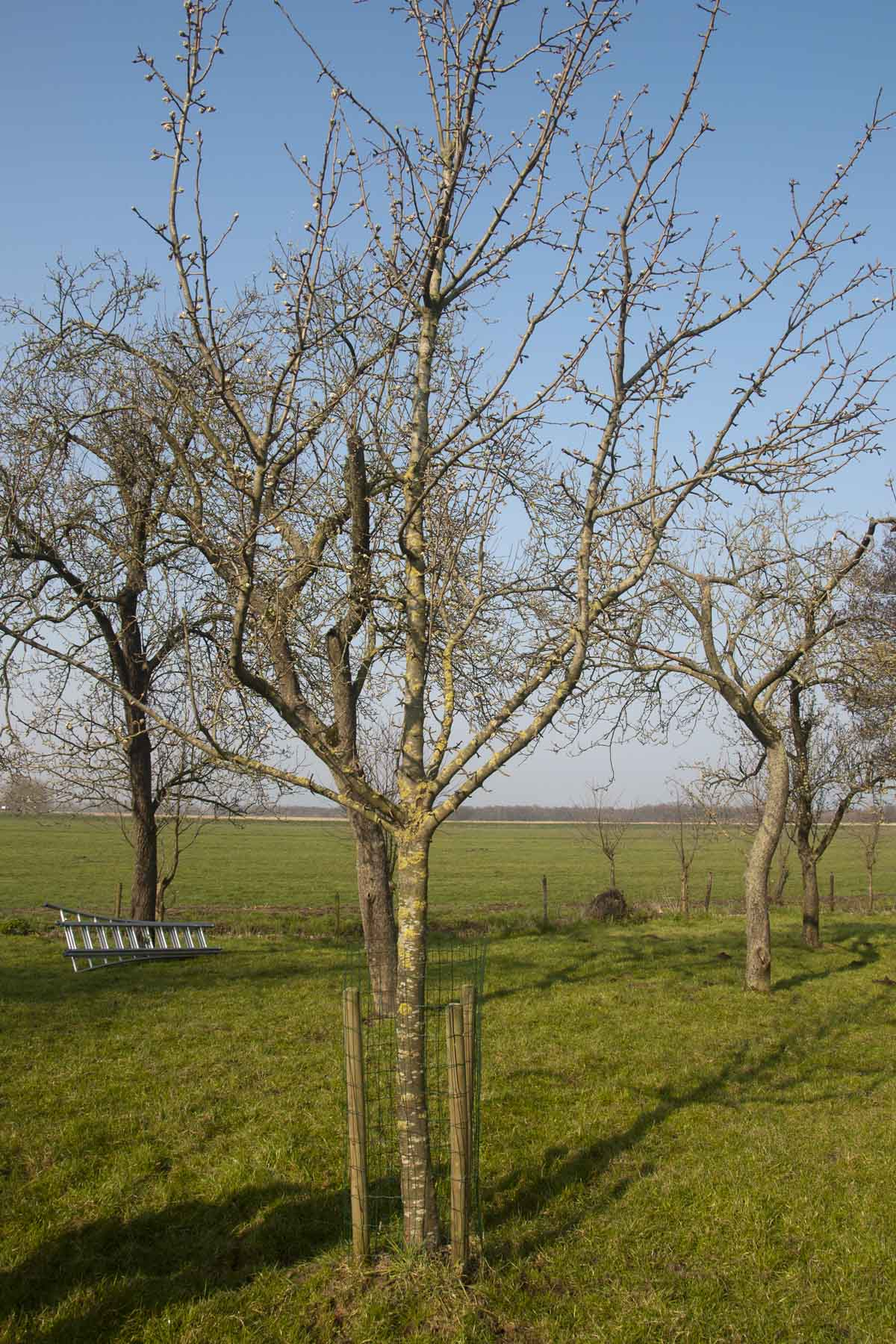 2014 03 29 HSB Wanneperveen 5175