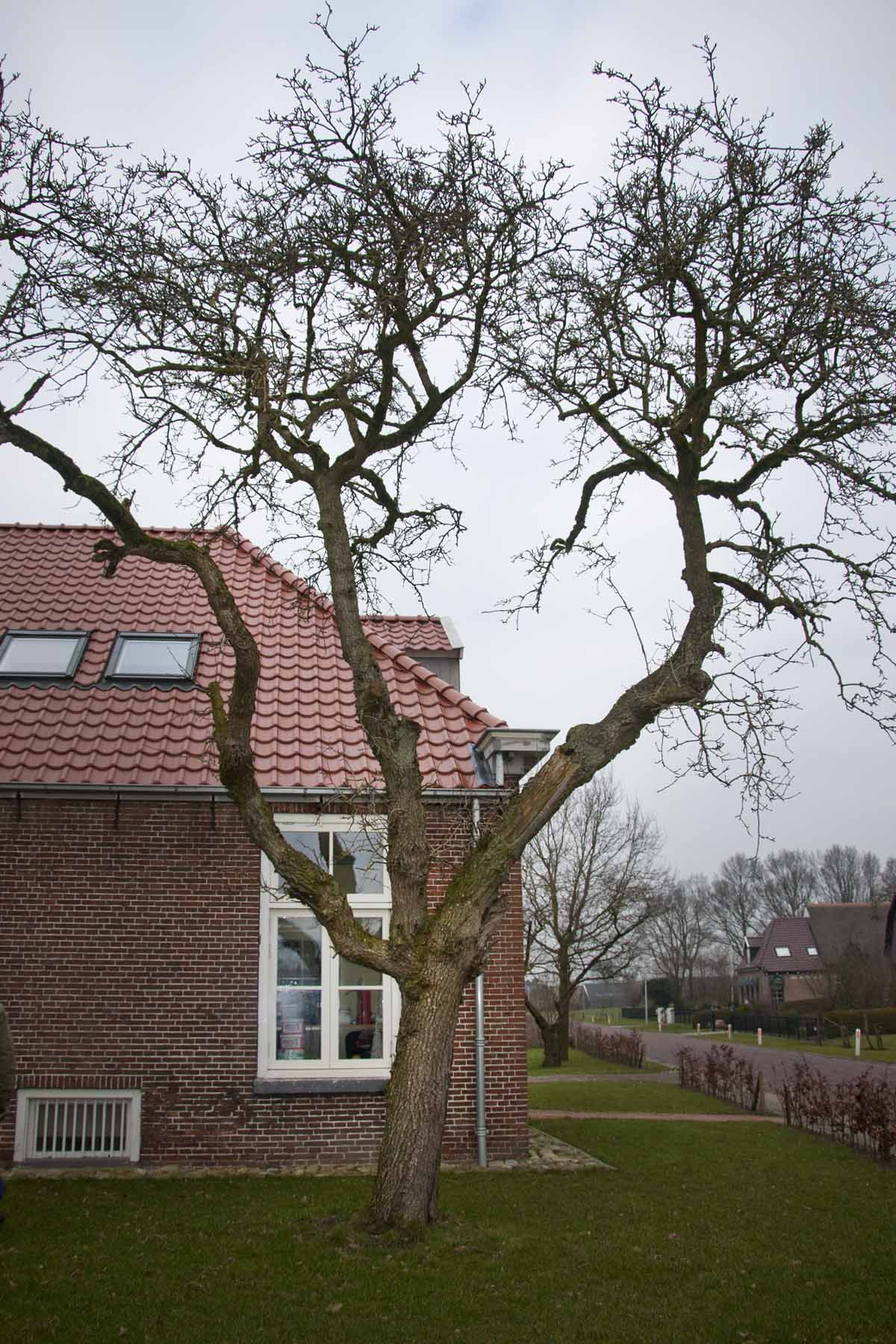 2011-02-19-hsb-zuidveen-2690